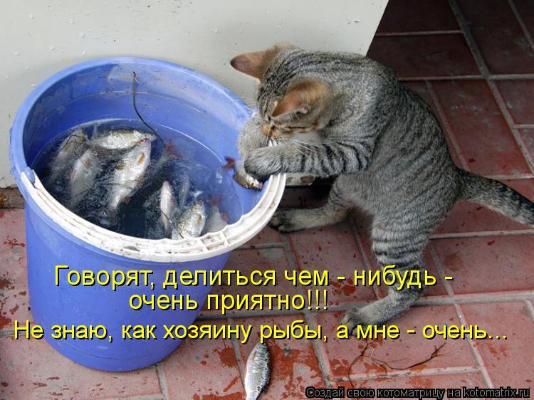 Котоматрица: Говорят, делиться чем - нибудь - очень приятно!!! Не знаю, как хозяину рыбы, а мне - очень...