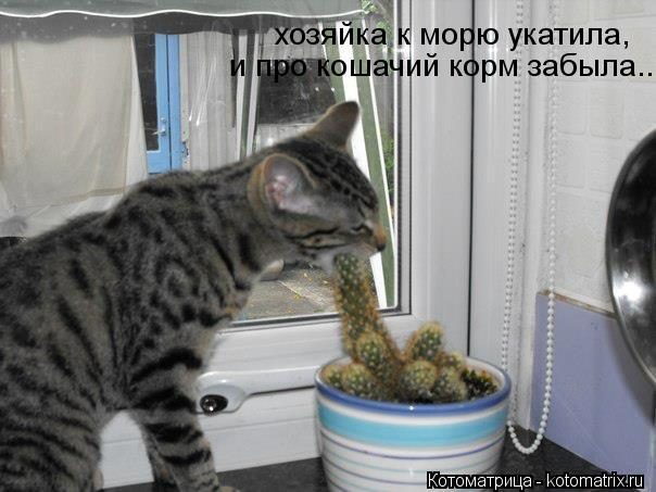 Котоматрица: хозяйка к морю укатила, и про кошачий корм забыла...