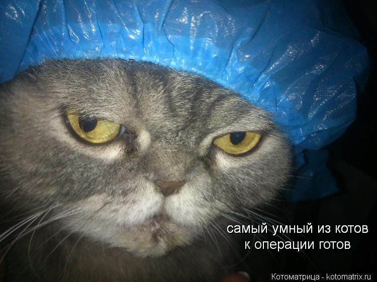 Котоматрица: самый умный из котов самый умный из котов к операции готов