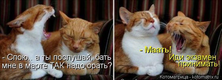 Котоматрица: - Спою.. а ты послушай, бать мне в марте ТАК надо орать? - Маать! Иди экзамен принимать!