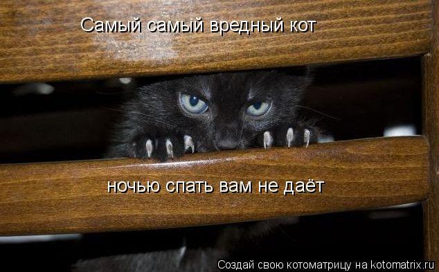 Котоматрица: Самый самый вредный кот ночью спать вам не даёт