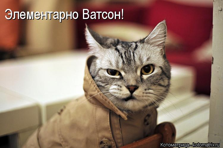 kotomatritsa_RS.jpg