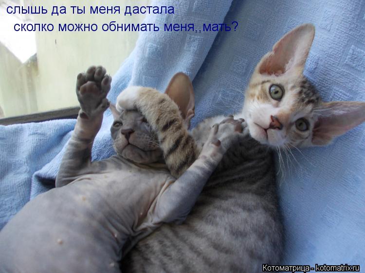 Котоматрица: слышь да ты меня дастала  сколко можно обнимать меня,,мать?
