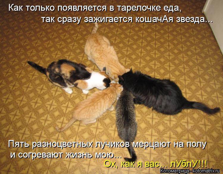 Котоматрица: Как только появляется в тарелочке еда, так сразу зажигается кошачАя звезда... Пять разноцветных лучиков мерцают на полу и согревают жизнь м