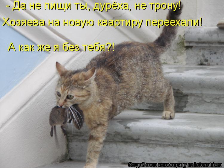 Котоматрица: Хозяева на новую квартиру переехали! А как же я без тебя?! - Да не пищи ты, дурёха, не трону!