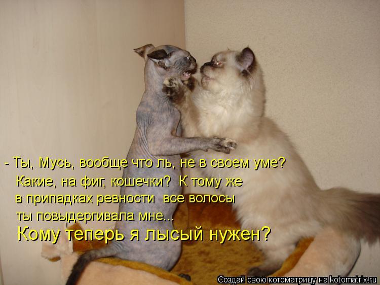 Котоматрица: - Ты, Мусь, вообще что ль, не в своем уме? Какие, на фиг, кошечки?  К тому же ты повыдергивала мне... Кому теперь я лысый нужен? в припадках ревнос