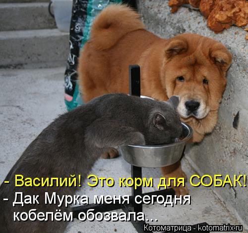 Котоматрица: - Василий! Это корм для СОБАК! - Дак Мурка меня сегодня кобелём обозвала...