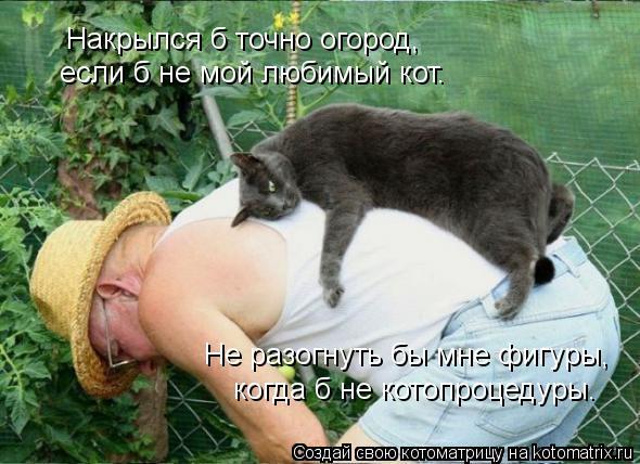 Котоматрица: Не разогнуть бы мне фигуры, когда б не котопроцедуры. Накрылся б точно огород, если б не мой любимый кот.