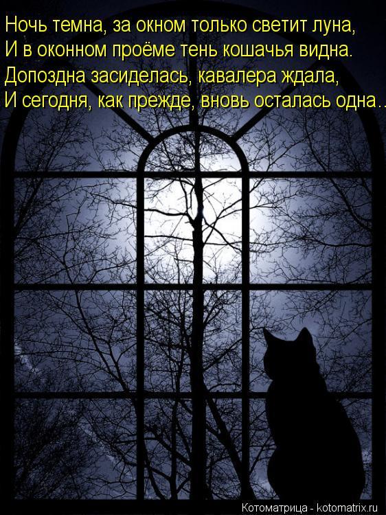 Котоматрица: Ночь темна, за окном только светит луна, И в оконном проёме тень кошачья видна. Допоздна засиделась, кавалера ждала, И сегодня, как прежде, вн