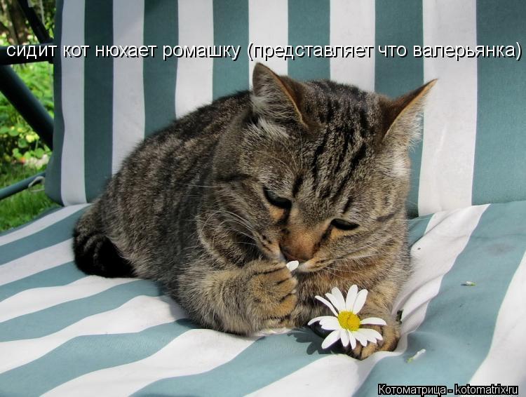 Почему кот нюхает меня