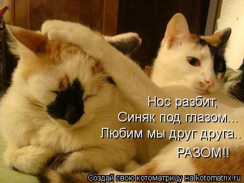 Котоматрица: Нос разбит,  Синяк под глазом... Любим мы друг друга.. РАЗОМ!!