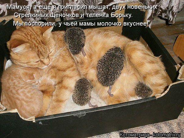Котоматрица: Мы поспорили, у чьей мамы молочко вкуснее! Мамуся, а еще я пригласил мышат, двух новеньких Стрелкиных щеночков и теленка Борьку.
