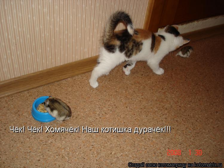 Котоматрица: Чёк! Чёк! Хомячёк! Наш котишка дурачёк!!!