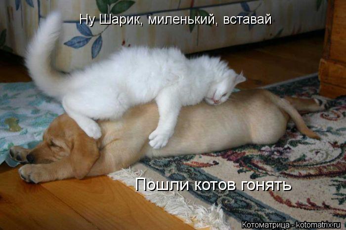 Котоматрица: Ну Шарик, миленький, вставай Пошли котов гонять