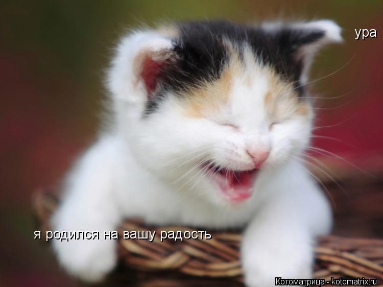 Котоматрица: ура я родился на вашу радость