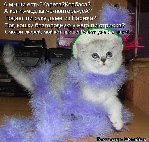Котоматрица: А мыши есть?Карета?Колбаса? А котик-модный-в-полтора-усА? Подает ли руку даме из Парижа? Под кошку благородную у него ли стрижка? Смотри скоре