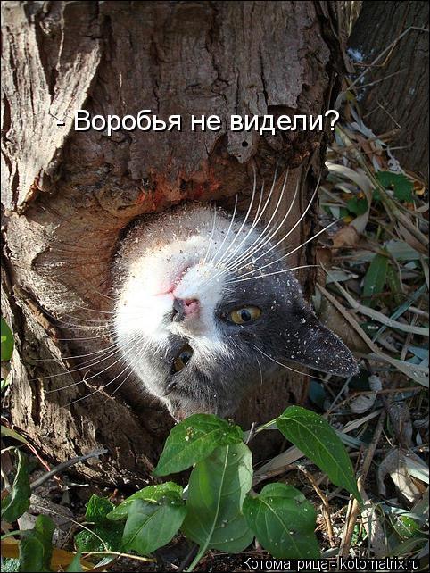 Котоматрица: - Воробья не видели?