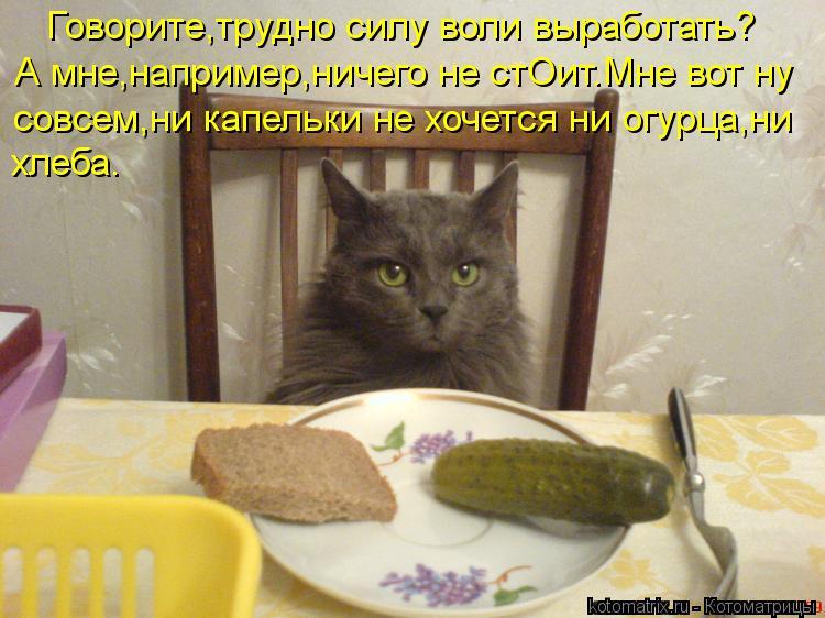 Котоматрица: Говорите,трудно силу воли выработать? А мне,например,ничего не стОит.Мне вот ну  совсем,ни капельки не хочется ни огурца,ни хлеба.
