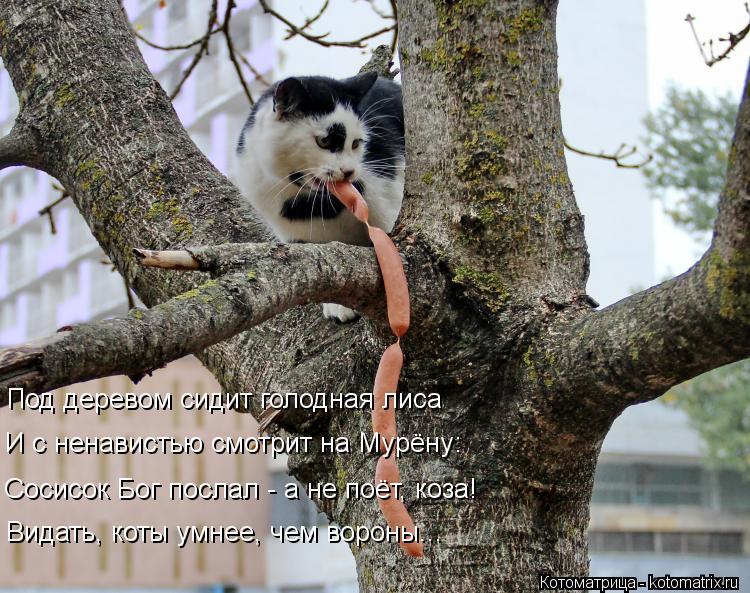 Котоматрица: Под деревом сидит голодная лиса И с ненавистью смотрит на Мурёну: Сосисок Бог послал - а не поёт, коза! Видать, коты умнее, чем вороны...