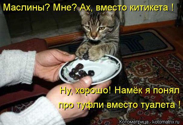 Котоматрица: Маслины? Мне? Ах, вместо китикета ! Ну, хорошо! Намёк я понял про туфли вместо туалета !