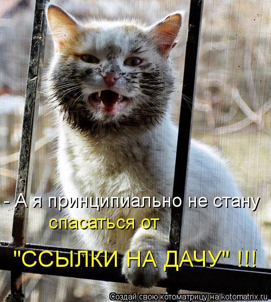 """Котоматрица: - А я принципиально не стану спасаться от  """"ССЫЛКИ НА ДАЧУ"""" !!!"""