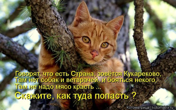 Котоматрица: Говорят, что есть Страна, зовётся Кукареково, Там нет собак и ветврачей, и бояться некого, Там не надо мясо красть ... Скажите, как туда попаст