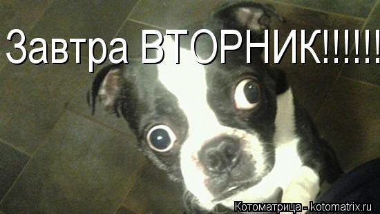 http://kotomatrix.ru/images/lolz/2012/10/22/kotomatritsa_sS.jpg