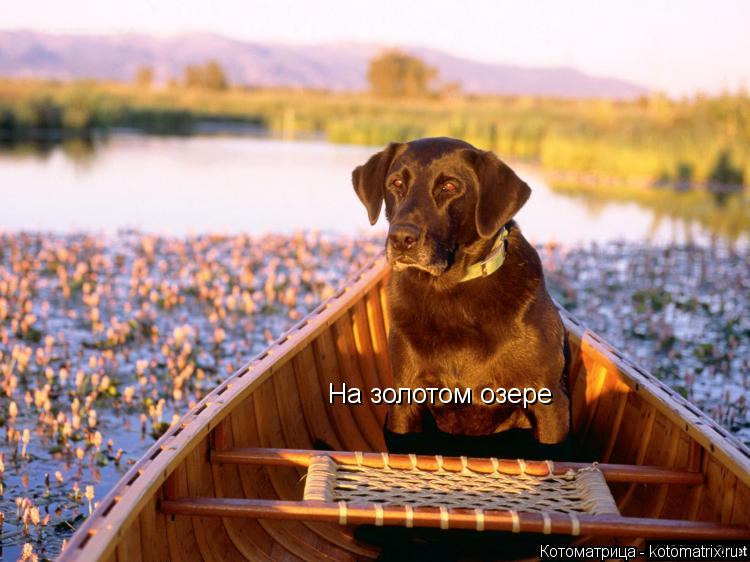 Котоматрица: На золотом озере