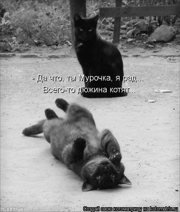 Котоматрица: - Да что, ты Мурочка, я рад... Всего-то дюжина котят...