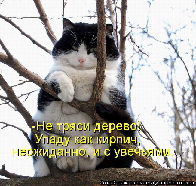 Котоматрица: -Не тряси дерево!  Упаду как кирпич, неожиданно, и с увечьями...