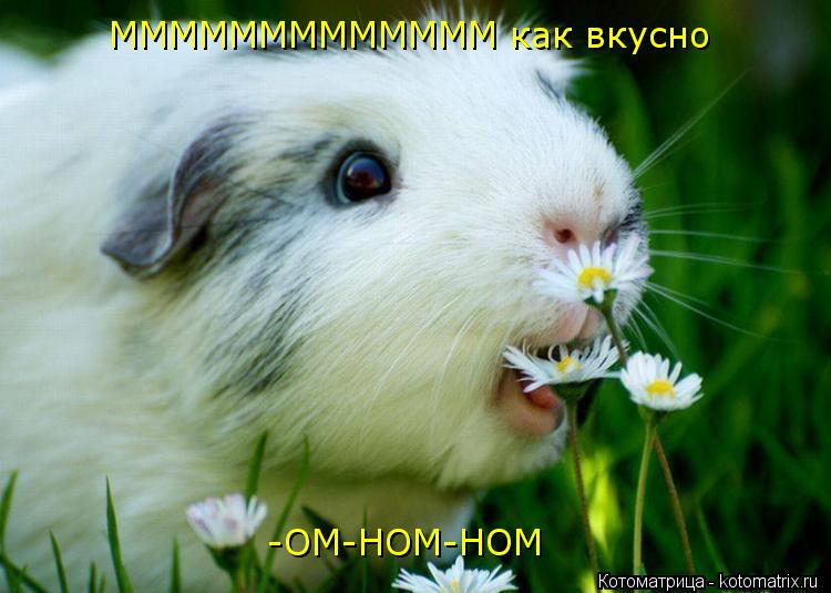 Котоматрица: МММММММММММММ как вкусно                       -ОМ-НОМ-НОМ