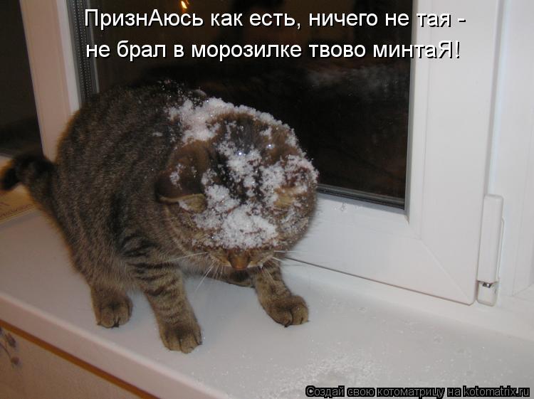 Котоматрица: ПризнАюсь как есть, ничего не тая - не брал в морозилке твово минтаЯ!