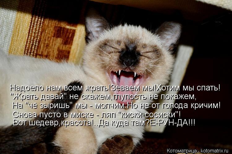 """Котоматрица: Надоело нам всем жрать!Зеваем мы!Хотим мы спать! """"Жрать давай"""" не скажем,глупость не покажем, На """"чё зыришь"""" мы - молчим.Но не от голода кричим!"""