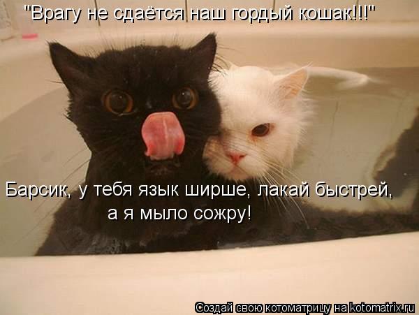 """Котоматрица: Барсик, у тебя язык ширше, лакай быстрей,  а я мыло сожру! """"Врагу не сдаётся наш гордый кошак!!!"""""""