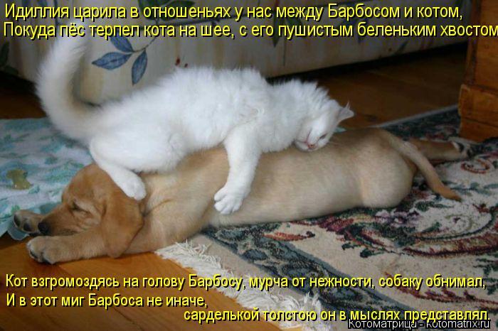 Котоматрица: Идиллия царила в отношеньях у нас между Барбосом и котом, Покуда пёс терпел кота на шее, с его пушистым беленьким хвостом. Кот взгромоздясь