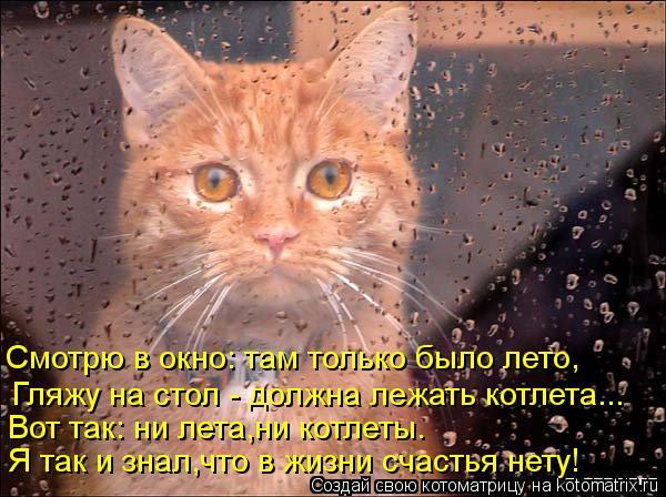 Котоматрица: Я так и знал,что в жизни счастья нету! Вот так: ни лета,ни котлеты. Гляжу на стол - должна лежать котлета... Смотрю в окно: там только было лето,