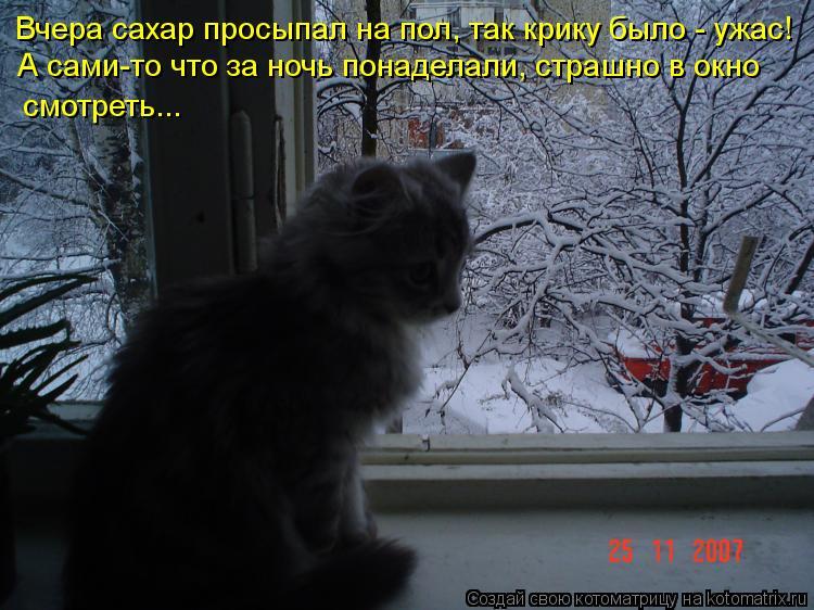Котоматрица: Вчера сахар просыпал на пол, так крику было - ужас! А сами-то что за ночь понаделали, страшно в окно смотреть...