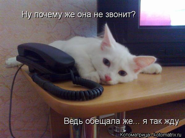Котоматрица: Ну почему же она не звонит? Ведь обещала же... я так жду