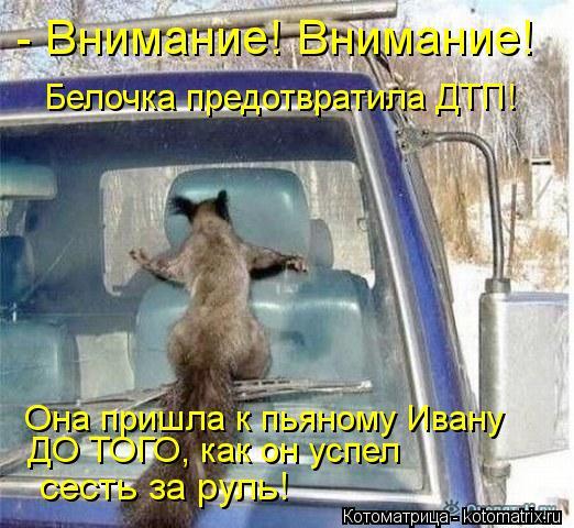 Котоматрица: Белочка предотвратила ДТП! Она пришла к пьяному Ивану ДО ТОГО, как он успел  сесть за руль! - Внимание! Внимание!