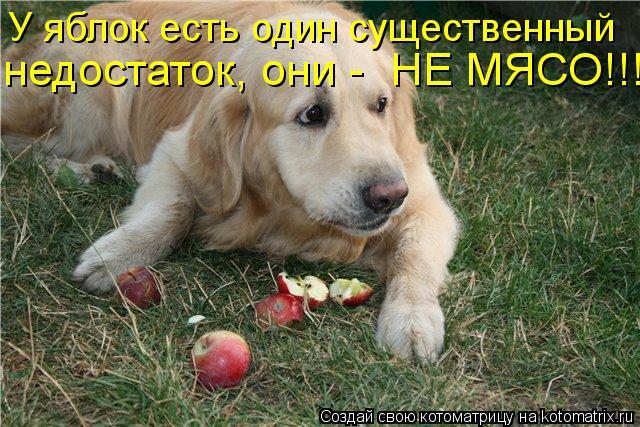 http://kotomatrix.ru/images/lolz/2012/10/24/kotomatritsa_TL.jpg