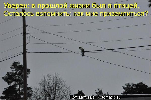 Котоматрица: Уверен: в прошлой жизни был я птицей. Осталось вспомнить: как мне приземлиться?