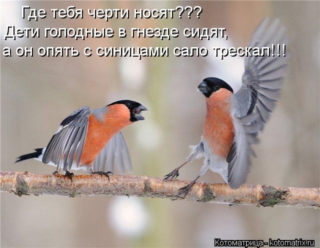 Котоматрица: Где тебя черти носят??? Дети голодные в гнезде сидят, а он опять с синицами сало трескал!!!