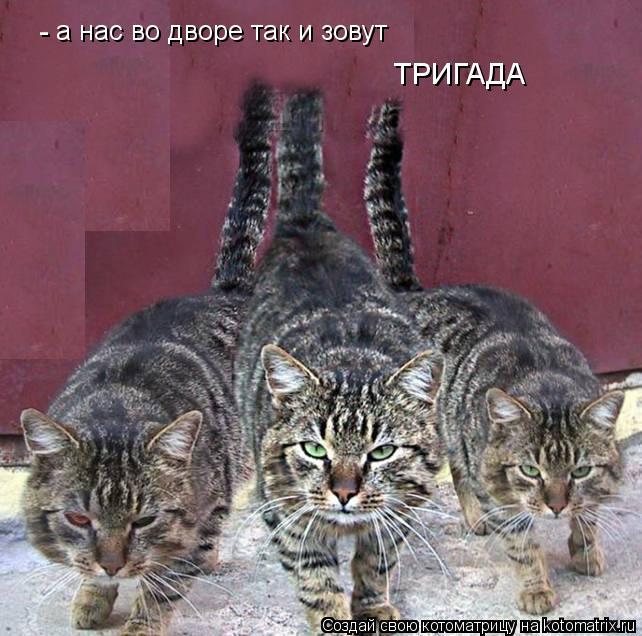 Котоматрица: а нас во дворе так и зовут ТРИГАДА -