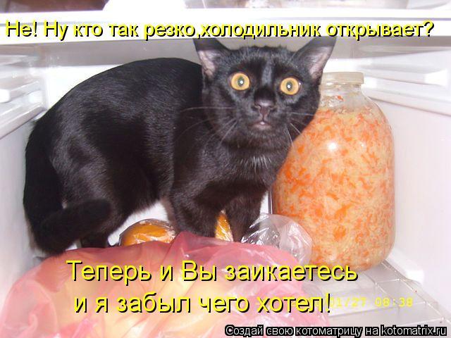 Котоматрица: Не! Ну кто так резко,холодильник открывает? Теперь и Вы заикаетесь   и я забыл чего хотел!