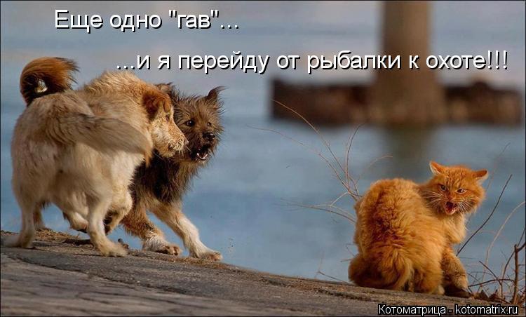 """Котоматрица: Еще одно """"гав""""... ...и я перейду от рыбалки к охоте!!!"""