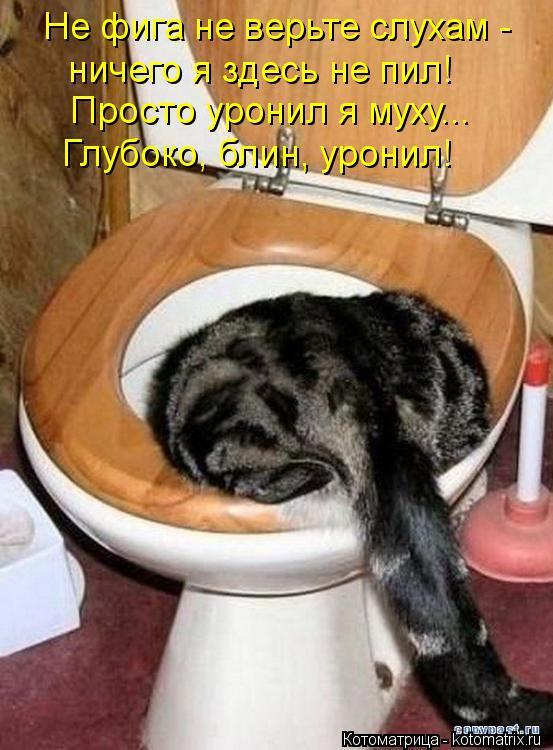 Котоматрица: Не фига не верьте слухам -  ничего я здесь не пил! Просто уронил я муху... Глубоко, блин, уронил!