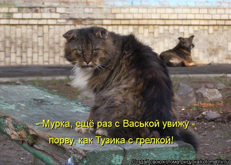 Котоматрица: - Мурка, ещё раз с Васькой увижу -  порву, как Тузика с грелкой!