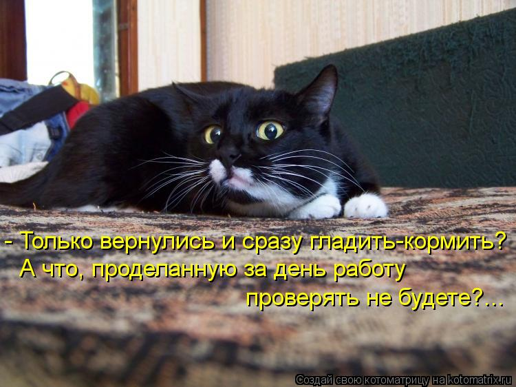 Котоматрица: - Только вернулись и сразу гладить-кормить? А что, проделанную за день работу  проверять не будете?...
