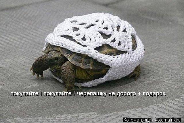 Котоматрица: покупайте ! покупайте ! черепашку не дорого + подарок