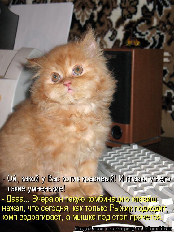 Котоматрица: - Ой, какой у Вас котик красивый! И глазки у него такие умненькие! нажал, что сегодня, как только Рыжик подходит, комп вздрагивает, а мышка под